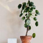 Goedkope planten